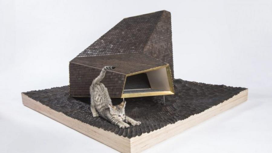 koty z architekturą