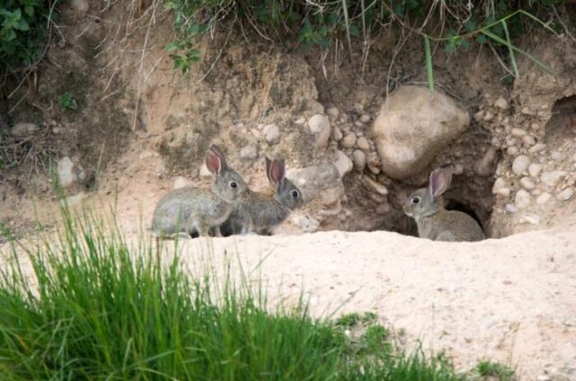króliki odkrywają skarb archeologiczny